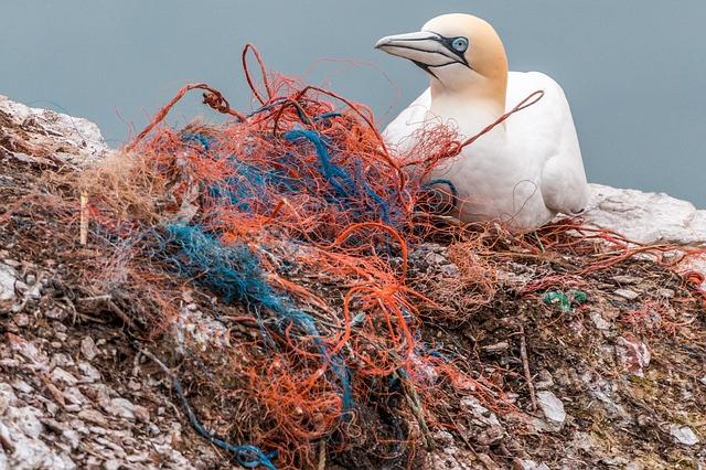 Animais convivendo com o plástico. Foto: Pixabay.
